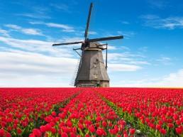образование в холандия
